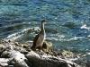 nature croatie